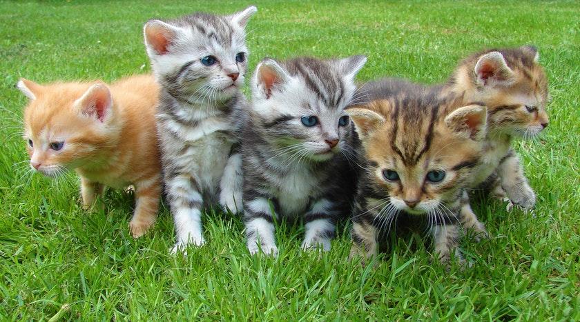 ¿Quieres dejar de ver los gatitos que comparte tu tía Paqui?