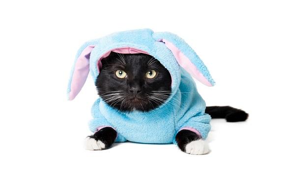 ¿Te han dado gato por liebre en desarrollo web? ¡Haber escogido rana!